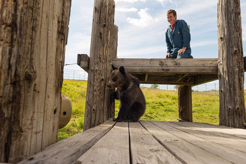 Bear Research, Education, and Conservation Center WSU