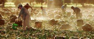 Farm to Table Onion