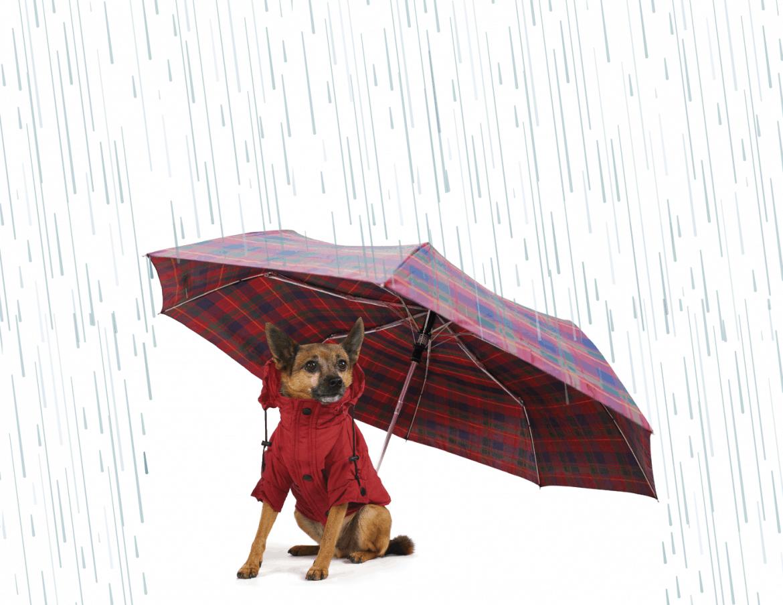 Learning to Love Washington Rain