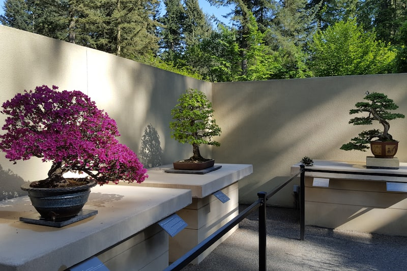 Pacific Bonsai Museum Is One Of Two In The United States 1889 Magazine