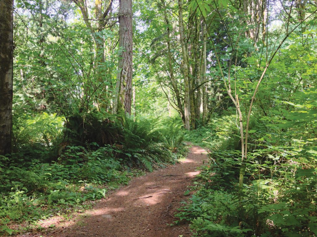 Hike serene, forested trails at Japanese Gulch Park.